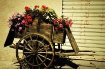 Carro fiorito – Varie 49